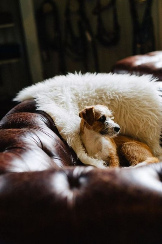 Organikus, Mosható puha Bárányszőr betét